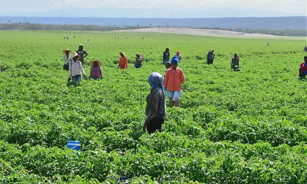 Altos funcionarios sector agrícola destacan proyecto tomates Grupo Linda
