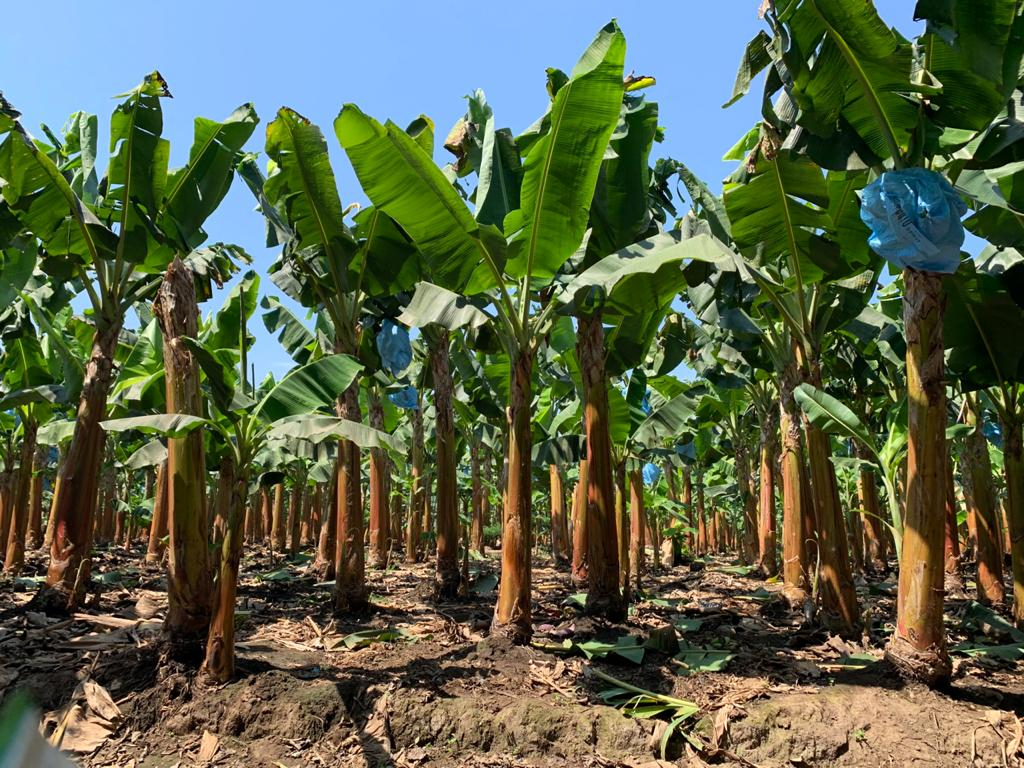 """Anuncia PepsiCo """"Agricultura Positiva"""" con metas globales para 2030 que ampliará prácticas agrícolas regenerativas"""